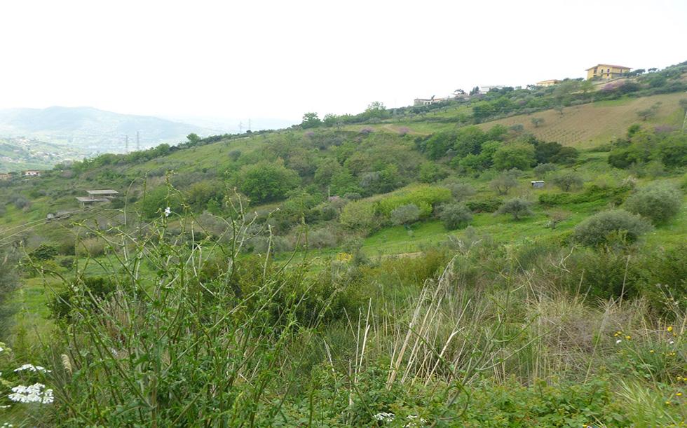 Terreno Agropoli Cod.101