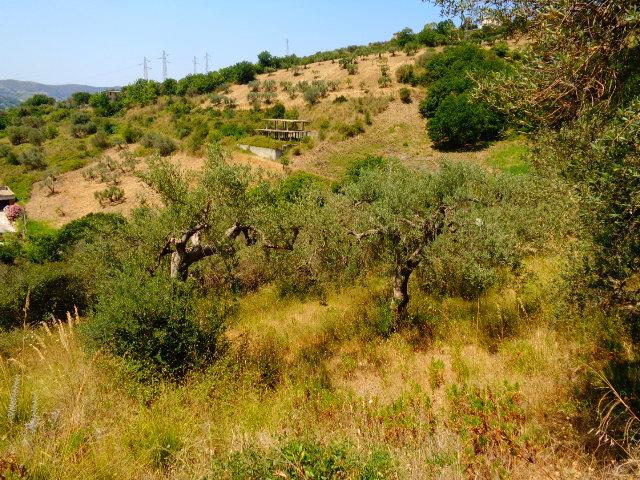 Terreno agricolo collinare