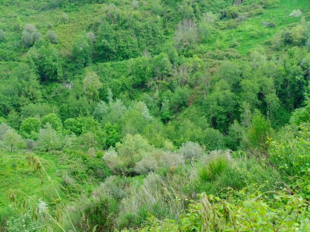 Sessa Cilento, Casigliano terreno collinare di circa 8 ettari.