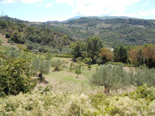 Prignano Cilento – Terreno di 1 ettaro con rudere