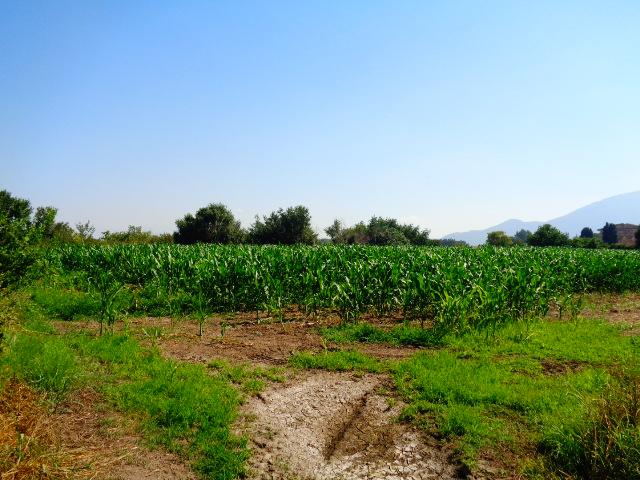 Capaccio – Via Vecchia Cilentana, terreno agricolo