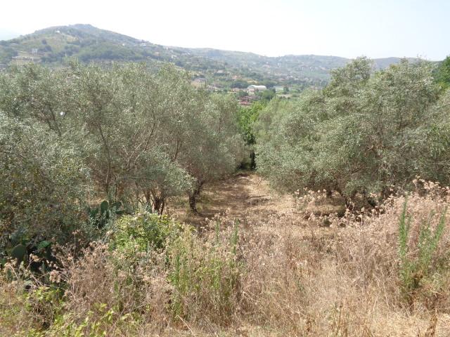 Agropoli – zona Moio, 8 ettari di terreno con uliveto
