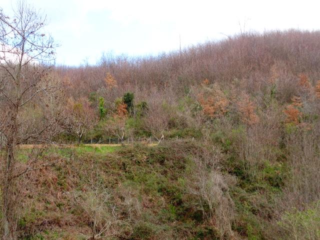 A confine tra Laureana e Lustra, 21,5 ettari di bosco ceduo