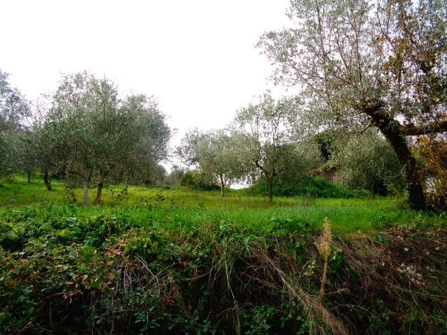 Agropoli – Zona Frascinelle – terreno agricolo di 4 ettari con uliveto