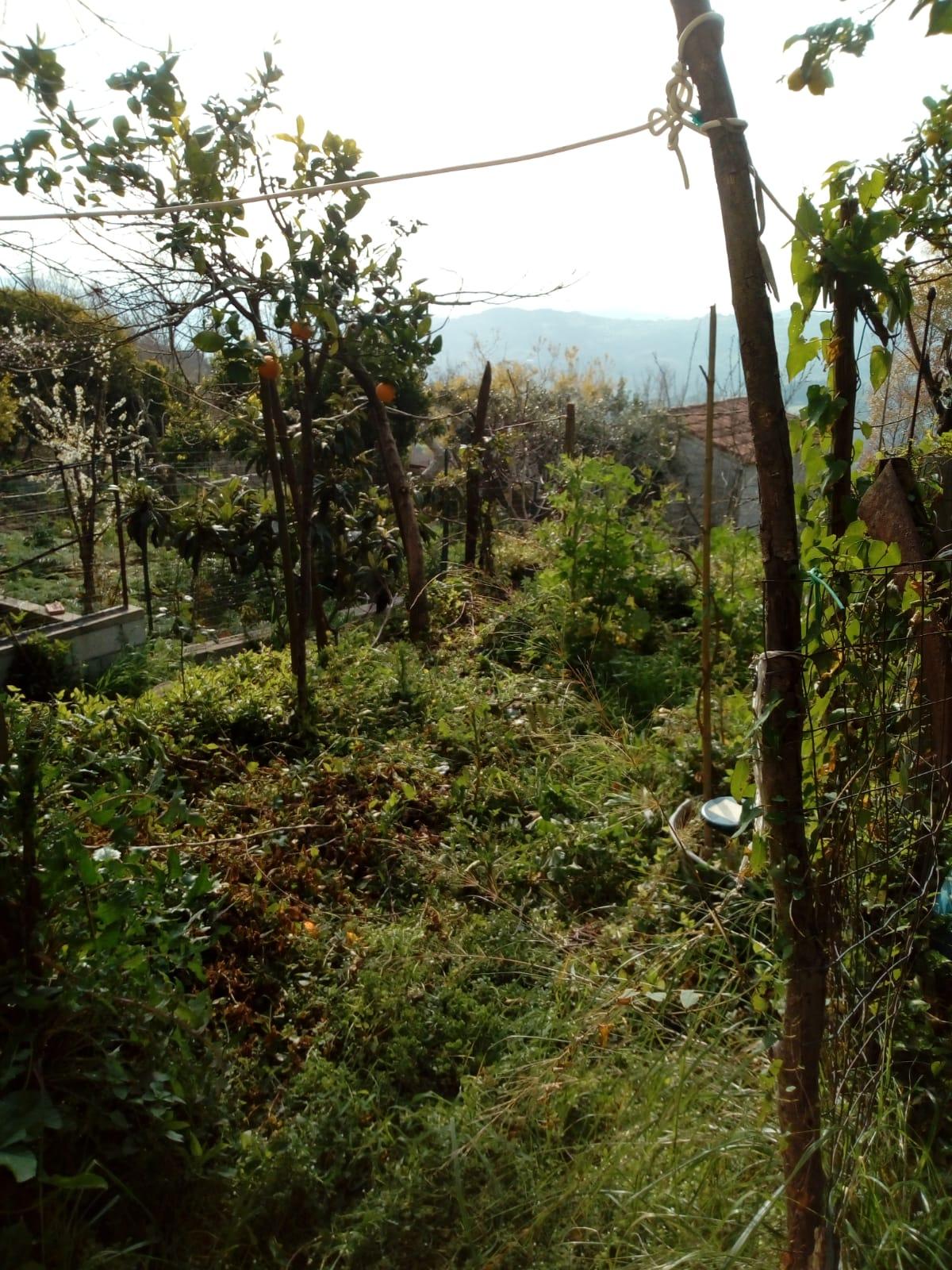 Prignano Cilento – cantina con piccolo giardino